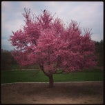 Photo taken at Arnold Arboretum by Melissa L. on 4/18/2013