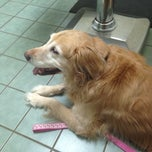 Photo taken at Southkent Veterinary Hospital by Linda Q. on 3/19/2014