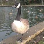 Photo taken at Abington Park Lake by Bombardier G. on 12/14/2014