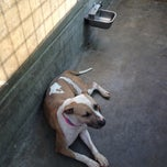 Photo taken at West LA Animal Shelter by Laura M. on 9/26/2012