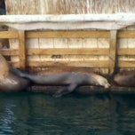 Photo taken at Sea Lion Observatory Deck by Misia on 2/17/2012