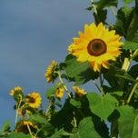 Photo taken at Windreach Farm by J.J. S. on 9/7/2014