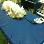 Photo taken at Veterinar by Stephi S. on 11/13/2012