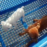 Photo taken at PetSmart by Patience G. on 7/20/2014