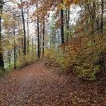 Photo taken at Käferberg Wald by Alicia C. on 11/11/2012