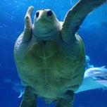 Photo taken at Adventure Aquarium by Lisa G. on 8/22/2012