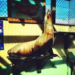 Photo taken at Morro Bay Aquarium by Joey L. on 11/19/2011
