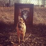 Photo taken at Columbia Dog Park by Shanita J. on 3/14/2012