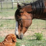 Photo taken at London Downs Stables by Vivian Mae H. on 12/28/2011