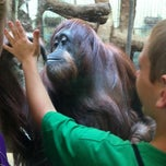 Photo taken at Great Ape House at the National Zoo by Jeremy R. on 8/12/2012