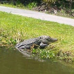 Photo taken at Okefenokee Swamp Park by Da_Badguy™ on 6/16/2012