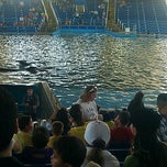 Photo taken at Shamu Show SPLASH ZONE !!! by Jerry F. on 3/12/2012