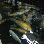 Photo taken at Koi Pond Kedai LB by # Kedai LB on 2/19/2012