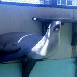 Photo taken at Morro Bay Aquarium by Chris W. on 9/4/2011