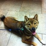 Photo taken at Acadiana Veterinary Clinic by Jennifer R. on 2/28/2012