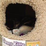 Photo taken at Pet Supplies Plus by Bridges B. on 9/1/2012