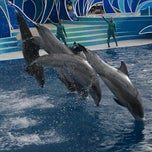 Photo taken at Dolphin Stadium - Blue Horizons by Mike C. on 2/27/2012