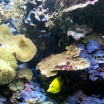 Photo taken at National Sea Life Centre by Natalia M. on 5/26/2012