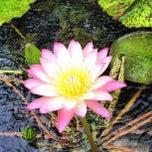 Photo taken at American Aquatic Gardens by Davepbass on 7/1/2012