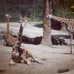 Photo taken at Oakland Zoo by Vanessa S. on 8/13/2012