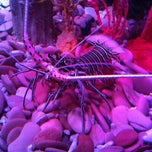Photo taken at National Sea Life Centre by Aaron B. on 4/21/2012