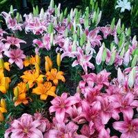 Foto tomada en Mercado de Plantas y Flores  Madreselva por Jose A. el 7/27/2012