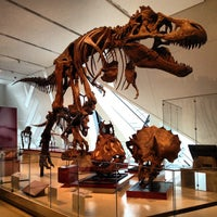 Photo taken at Royal Ontario Museum by Marina L. on 4/24/2013