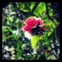 Photo taken at Harry P Leu Gardens by Nicholas B. on 1/13/2013