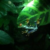 Photo taken at Frog Pond of Monteverde by Antoinette B. on 10/28/2012