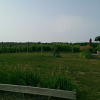 Photo taken at Silver Leaf Vineyard and Winery by Mike N. on 7/29/2014