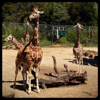 Photo taken at Oakland Zoo by Leonardo P. on 4/13/2013