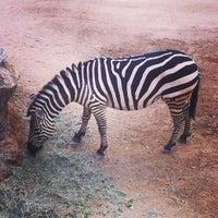 Photo taken at San Antonio Zoo by David H. on 1/28/2013