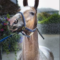 Photo taken at Royal Berkshire Polo Club by Michael T. on 7/3/2014