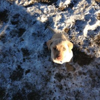 Photo taken at David Lorenz Dog Park by Matt F. on 1/3/2013
