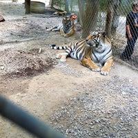 Photo taken at Exotic Feline Rescue Center by Jon P. on 11/18/2012
