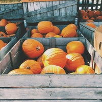 Photo taken at Curtis Orchard & Pumpkin Patch by brenna d. on 10/10/2015