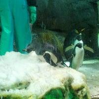 Photo taken at Osaka Aquarium Kaiyukan by London Symphony Orchestra on 3/4/2013