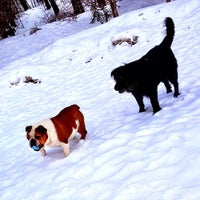 Photo taken at Mill Woods Dog Park by Andy H. on 4/7/2013