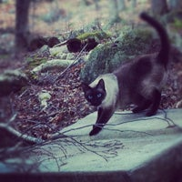 Photo taken at Bark Lake by David H. on 11/17/2012