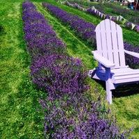 Photo taken at Lockwood Lavender Farm by liz l. on 7/11/2015