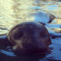 Photo taken at Sea Lion Cave by Julie W. on 2/18/2013