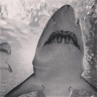 Photo taken at SEA LIFE Minnesota Aquarium by reiswigPHOTO on 7/18/2013