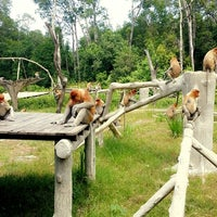 Photo taken at Labuk Bay Proboscis Monkey Sanctuary by Sweet B. on 10/19/2014