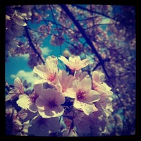 Photo taken at Tidal Basin by Renee D. on 4/13/2013