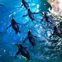 Photo taken at New England Aquarium by Pablo J. on 8/18/2013