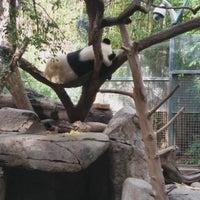 Photo taken at Giant Panda Research Station by Edward B. on 12/24/2015