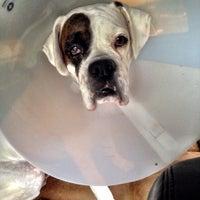 Photo taken at Animal Eye Specialists by Tiffany W. on 10/16/2013