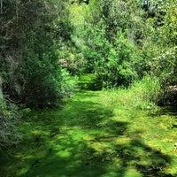 Photo taken at Okefenokee Swamp Park by Ulaş Ç. on 9/1/2013