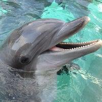 Photo taken at SeaWorld Orlando by Debora M. on 2/11/2013