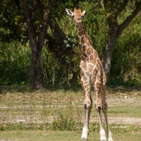 Photo taken at Zoo Miami by Kevin J. on 12/26/2012